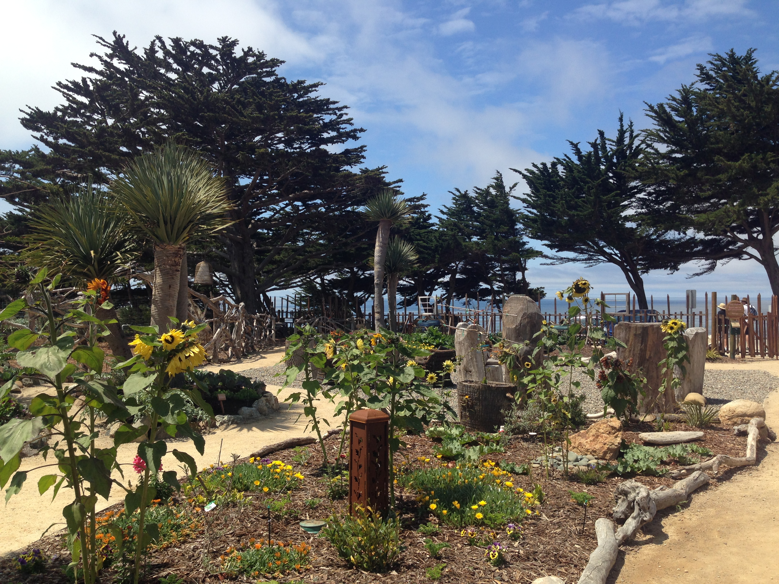 Cambria - Centrally Grown on the coast right off the 1 highway.